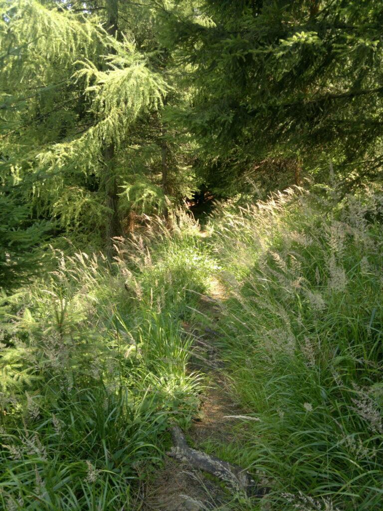 prales mionší