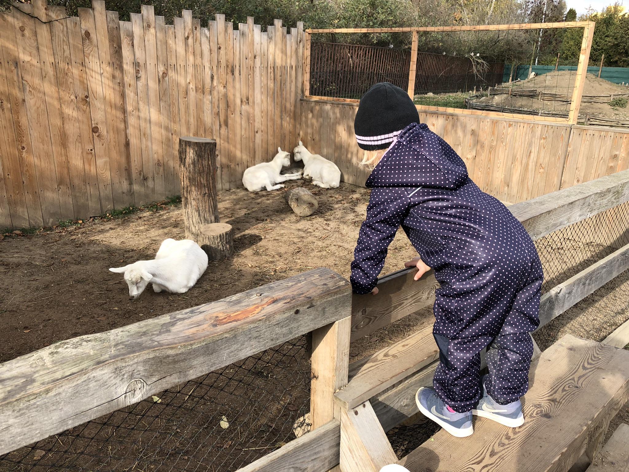 zoopark milíčov kozy