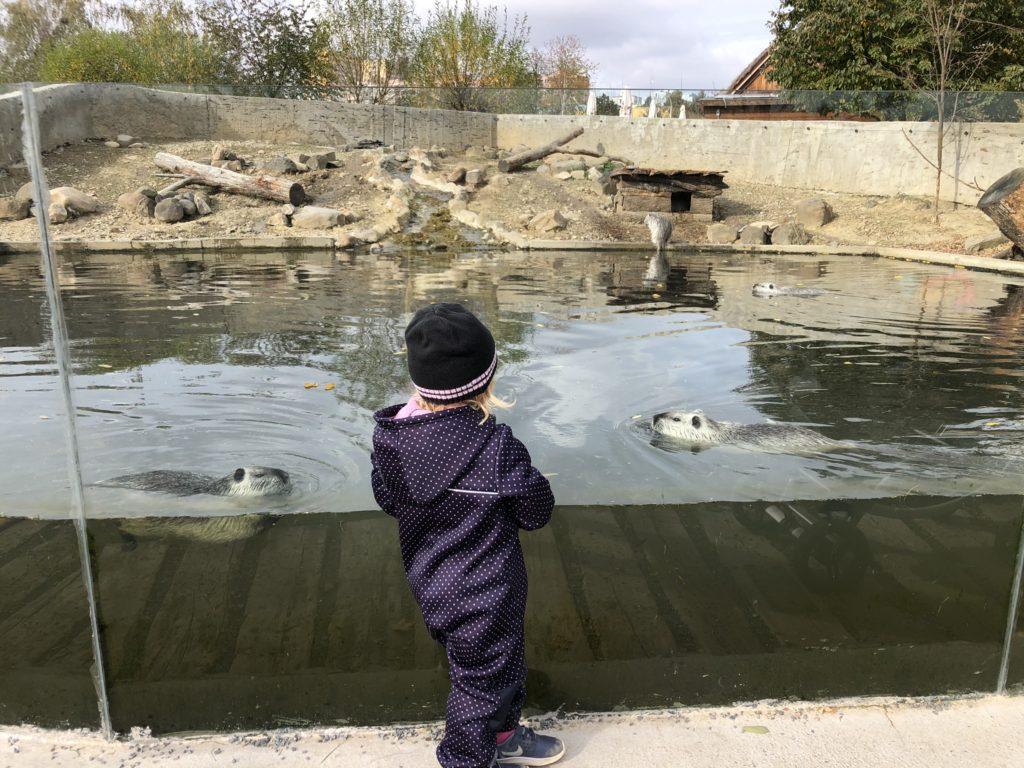 zoopark milíčov vydry
