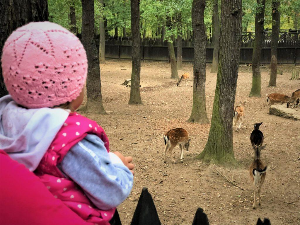kam za zvířátky v praze