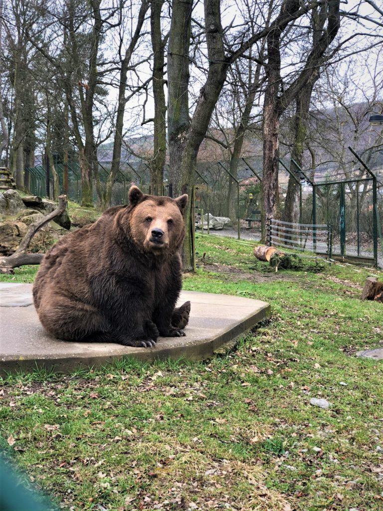 beroun medvedi výlet