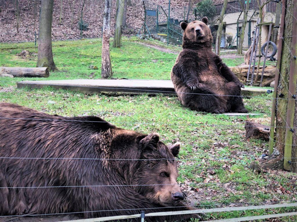 medvedi beroun vylet