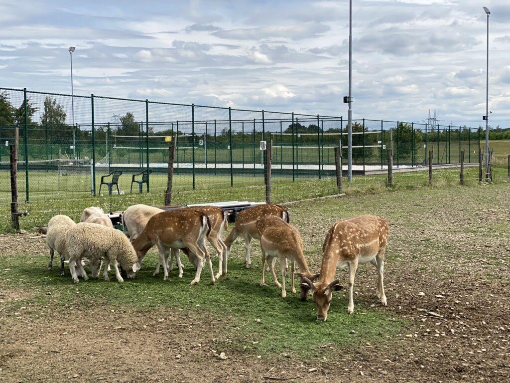 zvířata v praze
