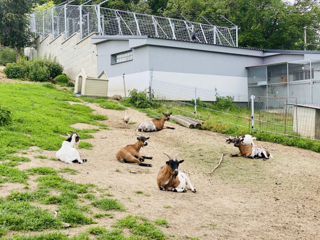 zoopark olovnice
