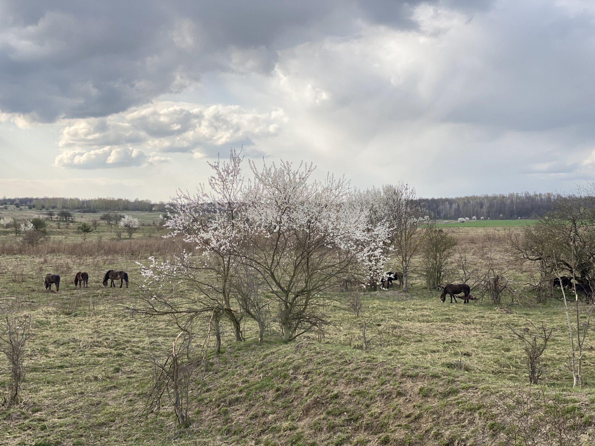 milovice rezervace divokých koní